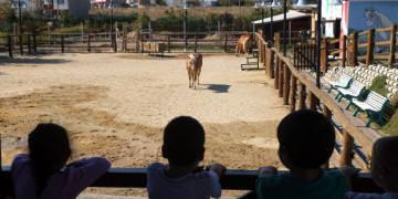 Öğrencilerden Hayvanat Bahçesine Ziyaret